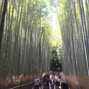 Pemandangan di hutan Bambu